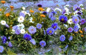 Nepali Flower