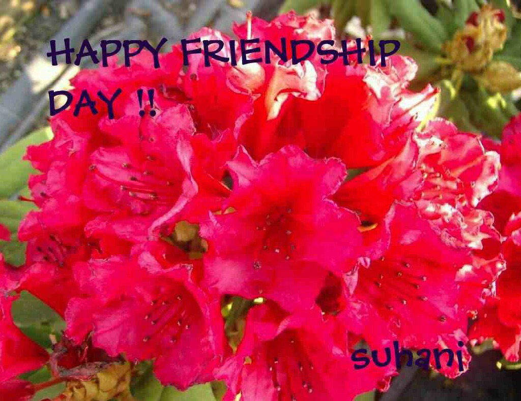 Friendship Day Greetings !