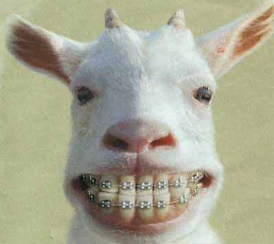Modern Goat