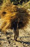nepal394_r.jpg